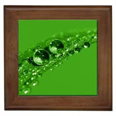 Green Drops Framed Ceramic Tile