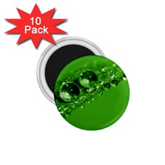 Green Drops 1 75  Button Magnet (10 Pack)