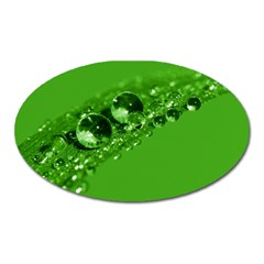 Green Drops Magnet (oval)