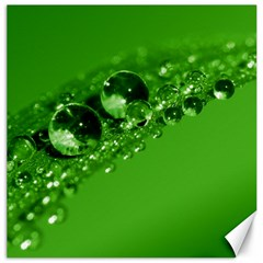 Green Drops Canvas 20  x 20  (Unframed)