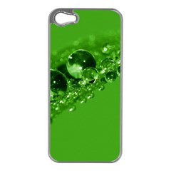 Green Drops Apple iPhone 5 Case (Silver)