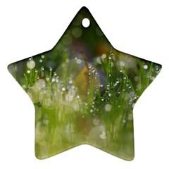 Drops Star Ornament