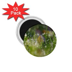 Drops 1.75  Button Magnet (10 pack)
