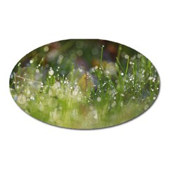 Drops Magnet (Oval)