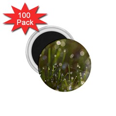 Waterdrops 1 75  Button Magnet (100 Pack)