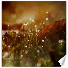 Waterdrops Canvas 12  x 12  (Unframed)