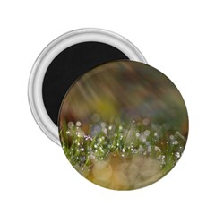 Sundrops 2.25  Button Magnet