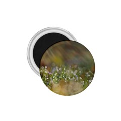 Sundrops 1.75  Button Magnet