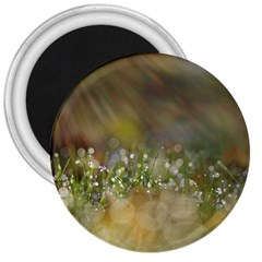 Sundrops 3  Button Magnet