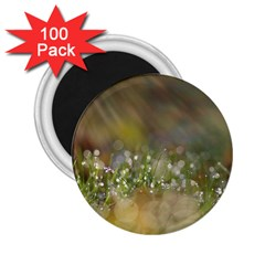 Sundrops 2.25  Button Magnet (100 pack)