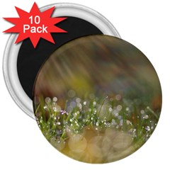 Sundrops 3  Button Magnet (10 Pack)