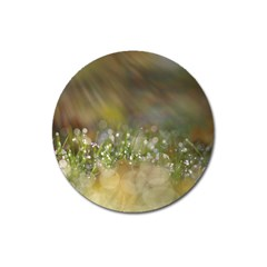 Sundrops Magnet 3  (Round)