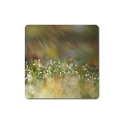 Sundrops Magnet (square)