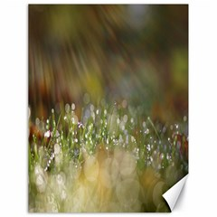 Sundrops Canvas 18  X 24  (unframed)