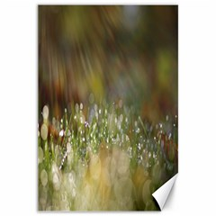 Sundrops Canvas 20  x 30  (Unframed)