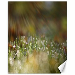 Sundrops Canvas 11  x 14  (Unframed)