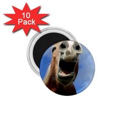 Haflinger  1 75  Button Magnet (10 Pack)