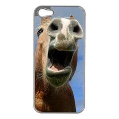 Haflinger  Apple iPhone 5 Case (Silver)