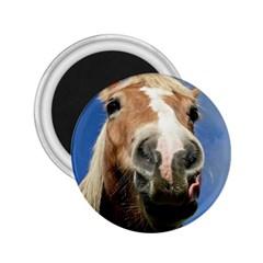 Haflinger  2.25  Button Magnet