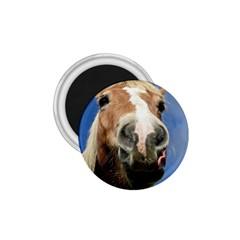 Haflinger  1.75  Button Magnet