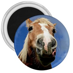 Haflinger  3  Button Magnet