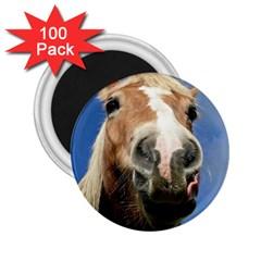 Haflinger  2 25  Button Magnet (100 Pack)