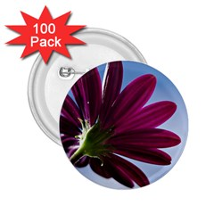 Daisy 2.25  Button (100 pack)