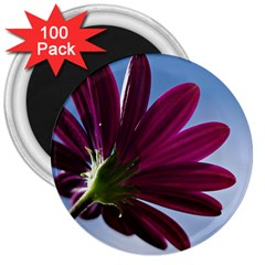 Daisy 3  Button Magnet (100 Pack)