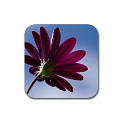Daisy Drink Coasters 4 Pack (square)