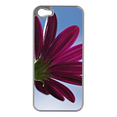 Daisy Apple Iphone 5 Case (silver)
