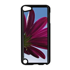 Daisy Apple Ipod Touch 5 Case (black)