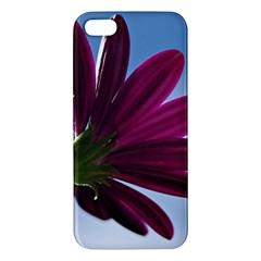 Daisy iPhone 5 Premium Hardshell Case
