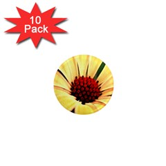 Osterspermum 1  Mini Button Magnet (10 Pack)