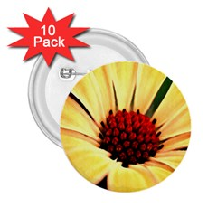 Osterspermum 2.25  Button (10 pack)