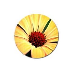 Osterspermum Magnet 3  (Round)