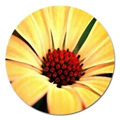Osterspermum Magnet 5  (Round)