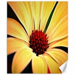 Osterspermum Canvas 8  x 10  (Unframed)