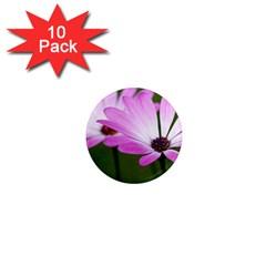 Osterspermum 1  Mini Button Magnet (10 pack)
