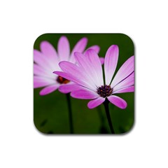 Osterspermum Drink Coasters 4 Pack (Square)