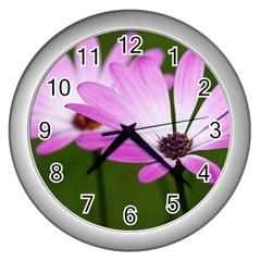 Osterspermum Wall Clock (Silver)