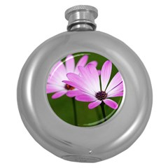 Osterspermum Hip Flask (Round)