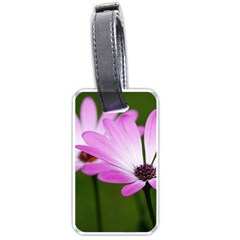 Osterspermum Luggage Tag (two Sides)