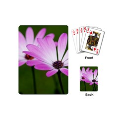 Osterspermum Playing Cards (Mini)