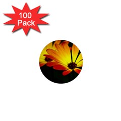 Osterspermum 1  Mini Button (100 Pack)