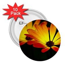Osterspermum 2.25  Button (10 pack)