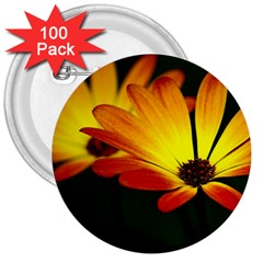 Osterspermum 3  Button (100 pack)