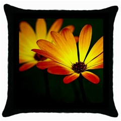 Osterspermum Black Throw Pillow Case