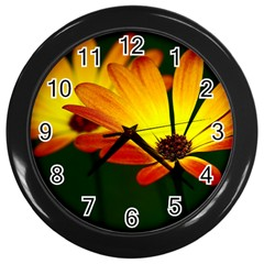 Osterspermum Wall Clock (Black)