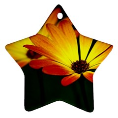 Osterspermum Star Ornament (two Sides)