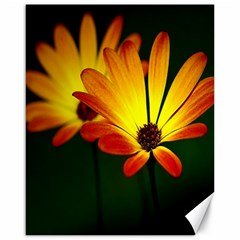 Osterspermum Canvas 16  x 20  (Unframed)